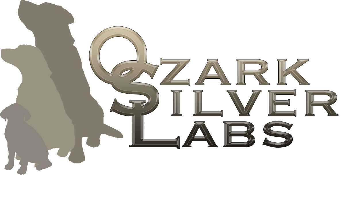 More about Ozark Silver Labs